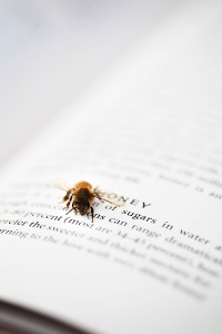 Bee Reading Book (photo by Kelly Vander Kley)