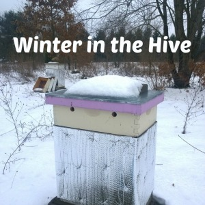 Winter in the Hive Title