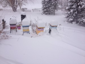 garden hives in much snow