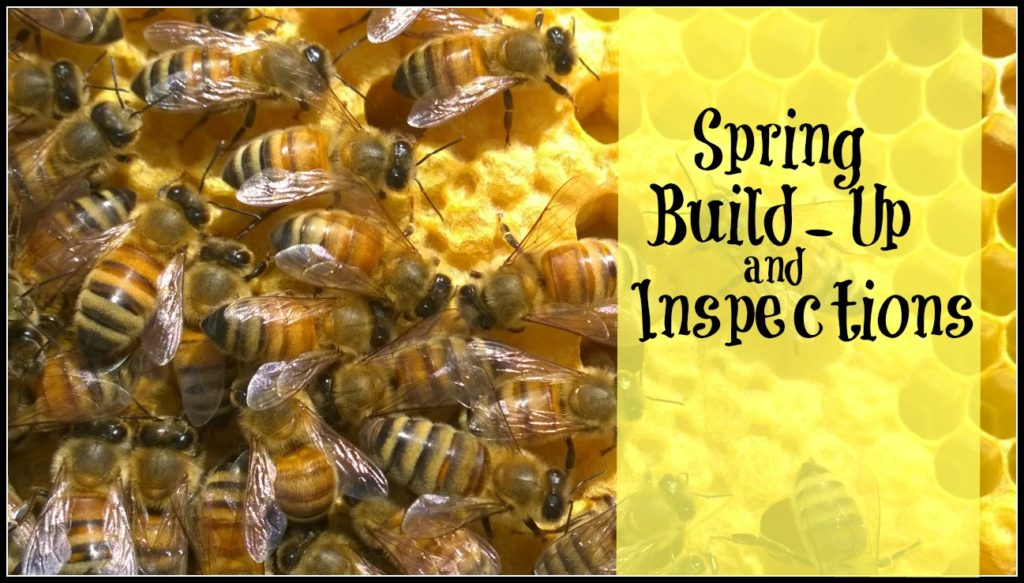 spring inspections